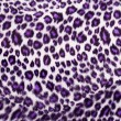 Leopard Printed in purple — Stockfoto #30616599