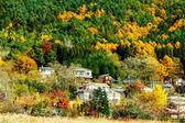 Village in forest — Стоковое фото