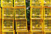 Fågeln marknaden i hong kong — Stockfoto