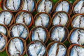 Fish in barrels for sell at market in Bangkok — Stock Photo