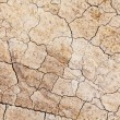 Dried crack land — Stock Photo