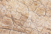 Dried crack land — Stock Photo