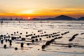 Deniz günbatımı — Stok fotoğraf