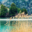 Forest and lake — Stock Photo