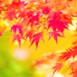 Yellow and red maple leave in autumn — Stock Photo #32806425