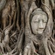 Buddha head in banyan tree — Stock Photo