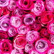 Pink roses background — Stock Photo #33161871