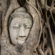 Buddhhead in old tree — Stock Photo #33162423