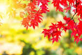 Maple leave in autumn — Stock Photo