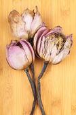Kytice sušených lotus — Stock fotografie