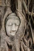 Buddha head in old tree — Stock Photo
