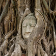 Buddhhead in banytree at Ayutthaya — Stock Photo #35131765