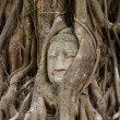 Stock Photo: Buddhhead in banytree at Ayutthaya