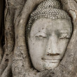 Stock Photo: Buddhhead statue in old tree
