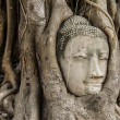 Buddha head in banyan tree — Foto de Stock