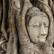 Buddha head in banyan tree — ストック写真
