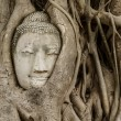 Buddhhead in banytree at Ayutthaya — Stock Photo #35308303