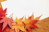 Greeting card with maple — Stock Photo