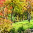 Colourful forest in Autumn — Stock Photo