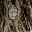Stock Photo: Buddhhead in old tree