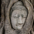 Stock Photo: Buddhhead in banytree