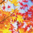 Stock Photo: Maple leave in autumn