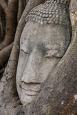 Buddha head in banyan tree at Ayutthaya — Stock Photo