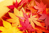 Autumn maple leaves in box — Stock Photo