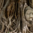 Stock Photo: Buddhhead statue and banytree