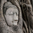 Buddhhead in banytree at Ayutthaya — Stock Photo #35823495