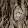 Buddhhead in old tree — Stock Photo #35843341