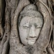 Buddha head in old tree at Ayutthaya — 图库照片