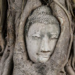 Buddhhead in old tree at Ayutthaya — Stock Photo #35859907