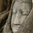 Buddhhead statue in old tree — Stock Photo #35862853