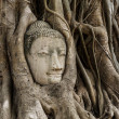Stock Photo: Buddhhead statue in banytree at Ayutthaya
