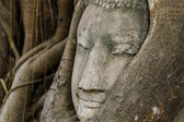 Buddha head statue in old tree — Stockfoto