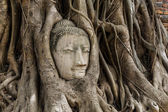 Buddha head statue in banyan tree at Ayutthaya — Stok fotoğraf