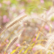 Wildness grass — Stock Photo #35890929