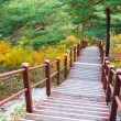 Wooden steps in forest — Stock Photo