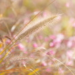 Wildness grass — Stock Photo