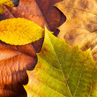 Maple leave in autumn — Stock Photo #36483681