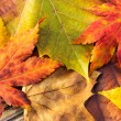 Maple leave in autumn — Stock Photo #36625309