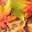 Fall leaves — Stock Photo #36756181