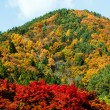 Autumn mountain — Stock Photo