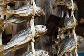 Salty fish — Stock Photo