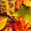 Fall leaves — Stock Photo #37687509