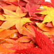 Autumn with maple leave — Stock Photo #37849131