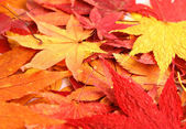 Autumn with maple leave — Stock Photo