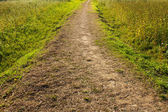 Wildness path — Stock Photo