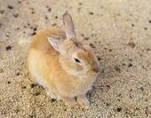 Farm rabbit — Stock Photo